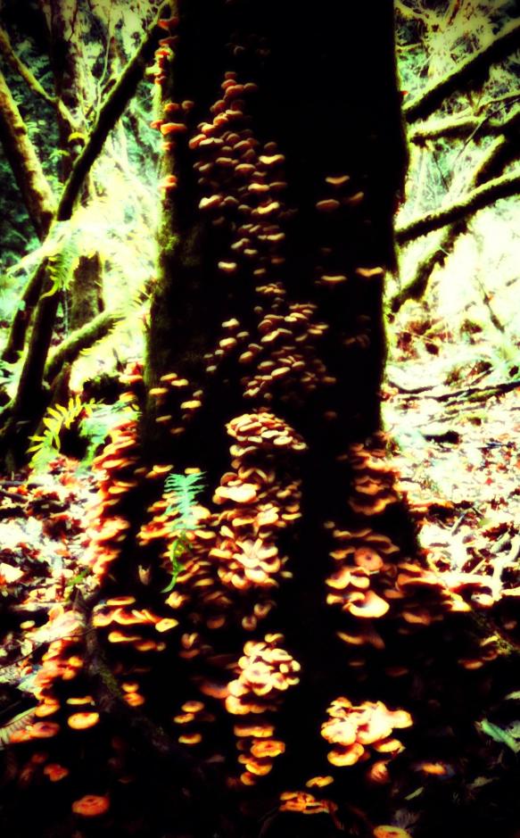 shroom-tree